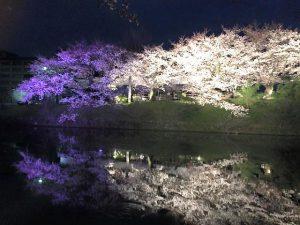 開催中~4/8(日) 福岡城さくらまつり