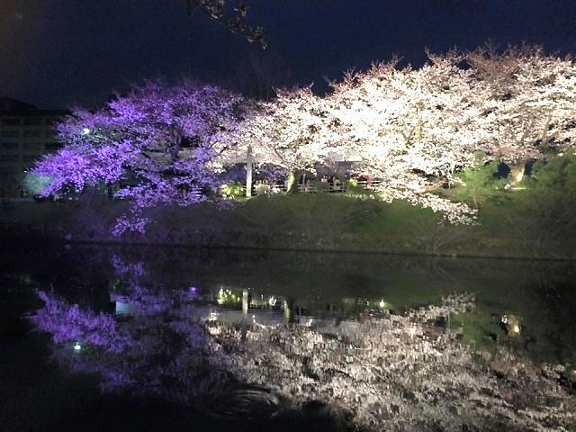 3/23(土)~4/1(月) 福岡城さくらまつり 開催